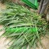 玉米秸秆青储粉碎收割机厂家销售