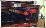 无锡鱼缸保养鱼缸维护 鱼缸清洗 鱼缸造景 水族设备保养