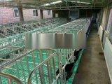 養豬廠設備母豬定位欄母豬限位欄