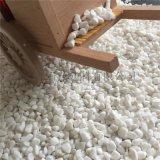 園林景觀白石子  水洗鵝卵石 白色碎石子