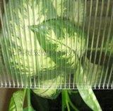 大棚PE阳光板 蔬果大棚阳光板