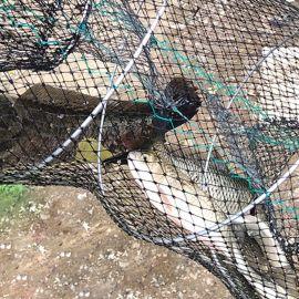自动折叠渔网捕鱼工具有结抓鱼户外渔