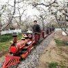 坐着网红轨道小火车逛景区看风景多自在啊