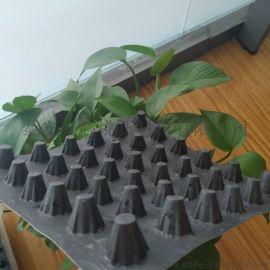 北京塑料排水板 蓄(疏)排水板生产厂家-直销供应