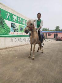 矮馬 矮馬價格 矮馬養殖場
