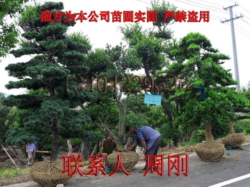 苏州别墅绿化 庭院景观绿化工程 别墅苗木培育基地