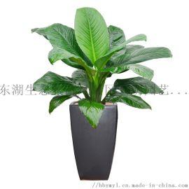 武汉公司园艺园林养护花卉租售,武汉单位花卉出租苗木