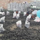 達州哪余有鵝卵石賣_鵝卵石達州銷售_廠家批發。