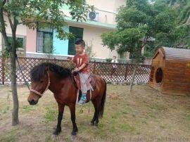 矮马 优质小矮马价格 驯马场矮马 矮马养殖场