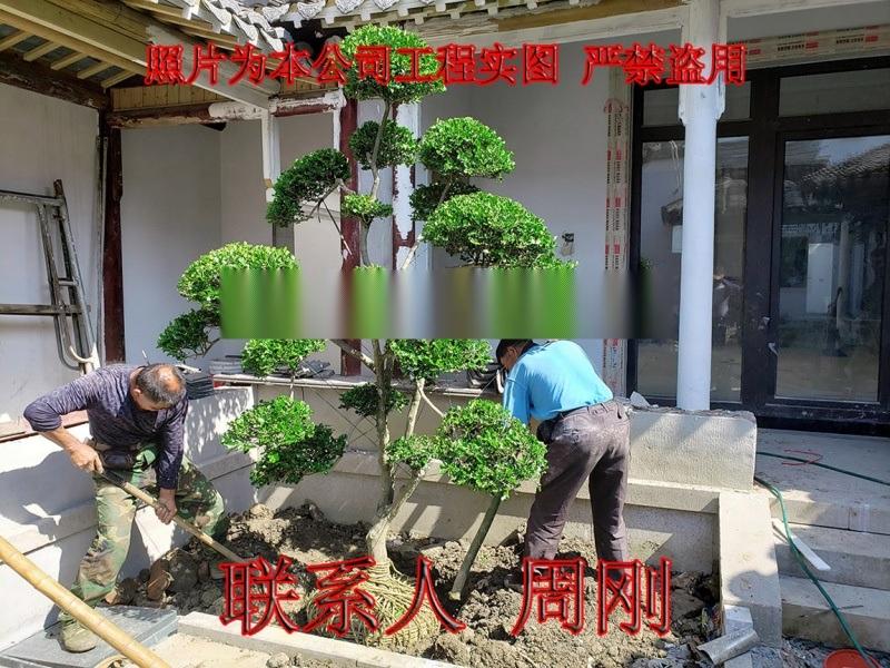 苏州别墅绿化工程 庭院苗木种植基地 园林绿化设计