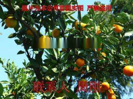 苏州果树苗木基地 别墅果树种植 苏州地产水果树苗圃