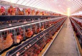专业供应鸡舍清粪机 上料机 捡蛋机养鸡设备 喷塑鸡笼