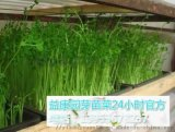 哪里可以培训种植芽苗菜技术-益康园