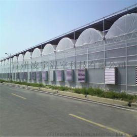 薄膜大棚建设连栋温室承建