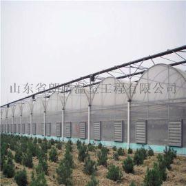 厂家直销连栋薄膜温室大棚 大量批发供应