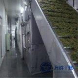 農產品單層帶式乾燥設備 批發菊花烘乾設備 地瓜幹網帶式烘乾機