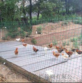 荷兰网,厂区圈地养殖围栏网,养鸡铁丝网1.5米高