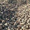 本格供应污水处理用鹅卵石 铺路用鹅卵石抛光鹅卵石