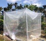 防虫网40目脐橙果园网棚 防虫网罩