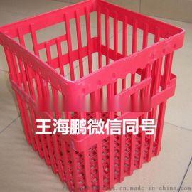 种蛋运输箱 种蛋塑料运输筐 鸡鸭蛋周转箱