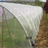 防鸟网防虫网厂家可定做各种规格果园葡萄园用网