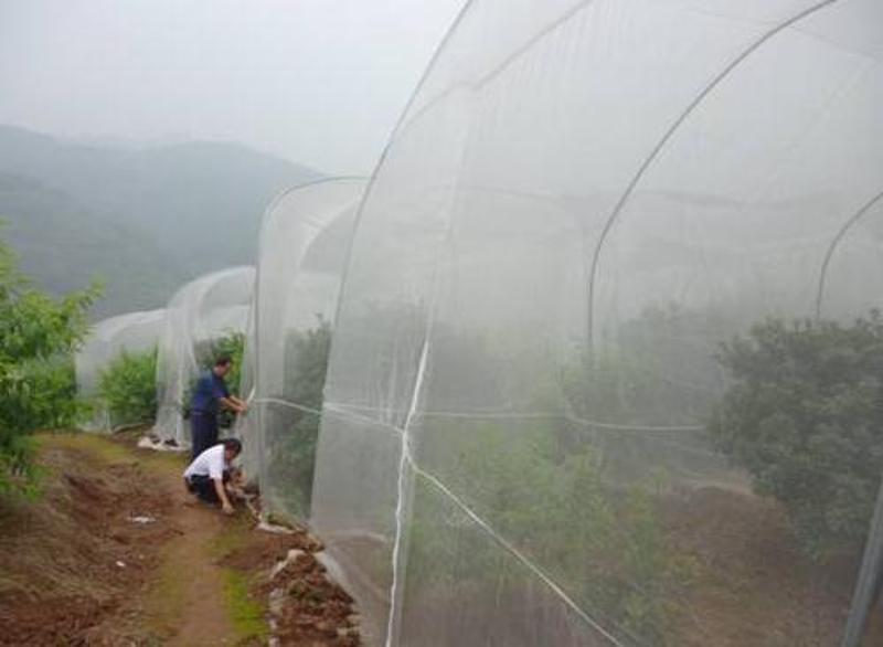 防虫网 牛蛙养殖网 大棚防虫网
