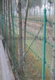 刺鐵絲圍欄網-清遠刺鐵絲圍欄網-刺鐵絲圍欄網市場