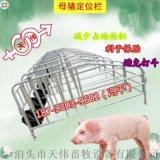 河北热镀锌十个位带食槽母猪限位栏天伟畜牧冯平出售