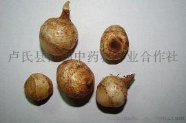正宗旱半夏种子,三步跳,麻芋子,优质中药材种子