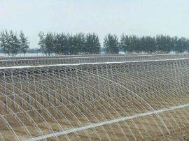 山东青州节能日光温室