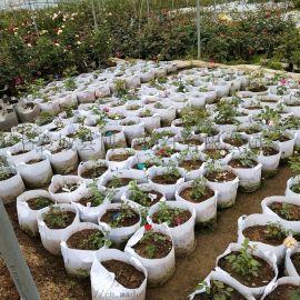 天津植树袋厂家 植树袋的尺寸和价位