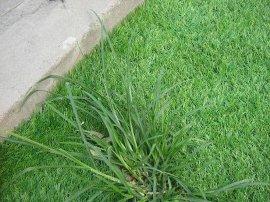 仿真草坪北京无土草坪绿化草皮