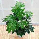 仿真植物八角金盘盆景家居装饰用品盆栽