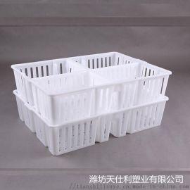 四川供应塑料鸡苗箱 四格塑料鸡苗箱 鸡苗鸭苗塑料箱