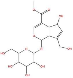 大量    去乙酰车叶草苷酸甲酯