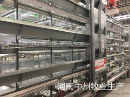 中州牧业养殖设备有限公司全自动化育雏笼蛋鸡笼