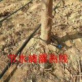 河南鶴壁果樹滴灌管技術指導及滴灌管規格