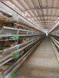 阶梯式不生锈蛋鸡笼 石家庄蛋鸡笼 自动蛋鸡笼