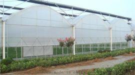 连栋薄膜温室智能圆拱形连栋温室青州泉瑞温室建造