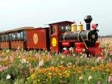 直銷兒童小火車 商場無軌火車 兒童遊樂設備生產廠家