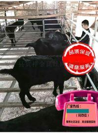 养羊设备漏粪板厂@养羊设备漏粪板厂家@养羊设备漏粪板生产厂家