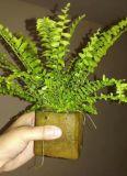 小森林-智慧養護無土栽培植物綠牆,牆體綠化
