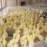 塑料养鸡网育雏塑料平网厂家销售