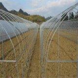 6分镀锌钢管,农用镀锌大棚管,免费设计蔬菜大棚,花卉棚配件齐全
