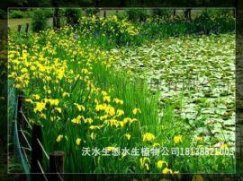 盐田那里有水生植物苗场