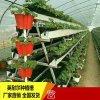 新型草莓立體種植槽 大棚蔬菜種植槽