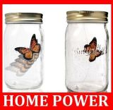 LED Butterfly jar( 蝴蝶罐 ) 电子蝴蝶 蝴蝶罐 蝴蝶宠物罐