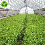 农业温室 温室大棚 GSP-0091 蔬菜大棚建设