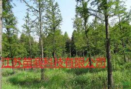 12公分中山杉哪里有     湖北 苗木基地