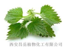 荨麻提取物 10:1  1% 昌岳供应